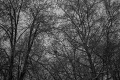 The middle of the woods. the great dark trees Royalty Free Stock Images
