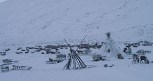 In the middle of Yamal, people living in yurts capturing video of a yurts camp , flock of reindeers and man driving on. A sleigh with reindeers amazing video stock video footage
