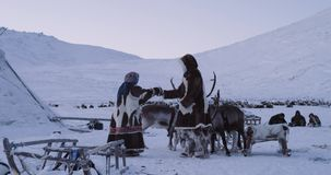 In the middle of Yamal in yurts camp man and woman wearing traditional clothes from fur , speeding day outside with. Reindeers , amazing capturing video stock video