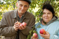 Middleaged couple stand under tree and hold apples Royalty Free Stock Images