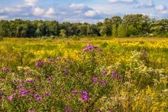 Middlefork大草原的,莱克县,伊利诺伊,美国开花的大草原 图库摄影