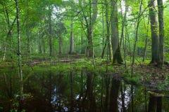 Midi d'été dans le stand à feuilles caduques humide Photo libre de droits