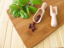 Midland hawthorn fruits, Crataegi fructus Stock Image