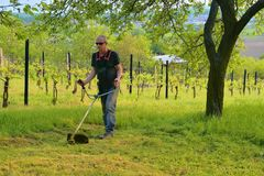 Midle aged man using a brush cutter. Mature man in the garden. Gardening concept royalty free stock photo
