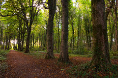 Midleton Woods Royalty Free Stock Image