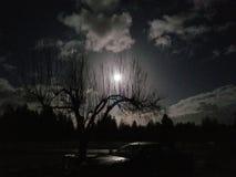 Midnatt himmel royaltyfria foton