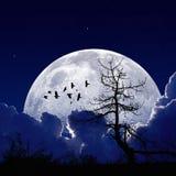 Midnatt måne Royaltyfria Bilder