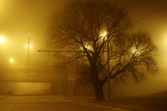 Midnight. Lonely tree in the midnight city fog Royalty Free Stock Photography