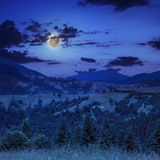 Midnight coniferous forest on a mountain slope Stock Photo