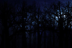 Midnight forest. Dark scary midnight forest, halloween background Stock Photo