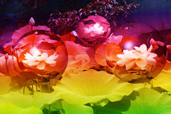Midnight in the Garden of Lotus Globes stock images