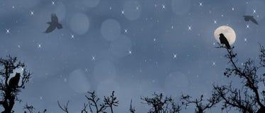 Midnight lot. Księżyc, gwiazdy, wrony i kot. ilustracja wektor