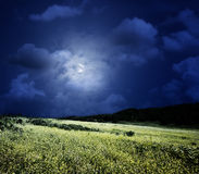 Midnight on the meadow Stock Image