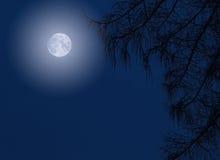 Midnight Moon and Night Tree Silhouette Stock Photos