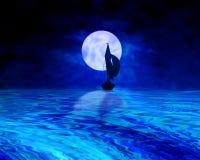 midnight segling Royaltyfri Bild