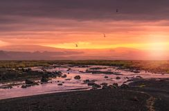 Midnight sunset in the wild landscape Iceland. Midnight sunset with birds flying Royalty Free Stock Images