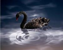 Midnight Swim. Digital art of black swan and reflection stock image