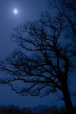 Midnight tree Royalty Free Stock Images
