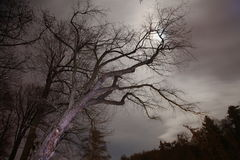 Midnight tree. A Tree in the midnight moon light Royalty Free Stock Images