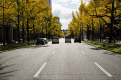 Midosuji Avenue in Osaka in autumn Royalty Free Stock Image
