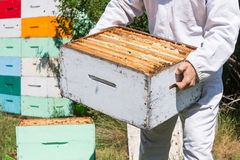 Midsection Of Beekeeper Carrying Honeycomb Box Stock Photo