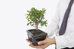 Midsection of businessman carrying potted plant over white background Royalty Free Stock Images