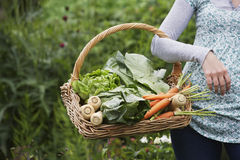 Midsection Of Cropped Woman With Vegetable Basket. Closeup midsection of a cropped woman holding vegetable basket outdoors royalty free stock image