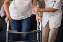 Midsection del doctor de sexo femenino que ayuda a la mujer mayor que camina con el caminante Foto de archivo libre de regalías