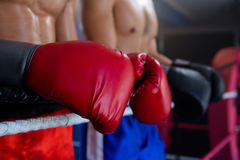 Midsection of male boxers standing by rope Royalty Free Stock Image