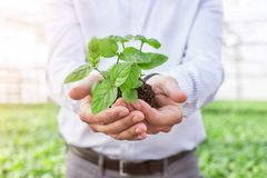 Midsection of mature owner holding seedling in plant nursery royalty free stock photos