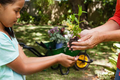 Midsection of senior woman giving seedling to granddaughter Royalty Free Stock Image