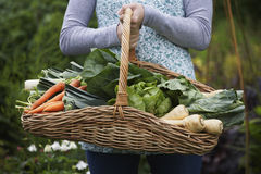 Midsection Of Woman With Vegetable Basket. Closeup midsection of a woman holding vegetable basket outdoors royalty free stock photography
