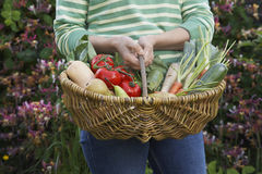 Midsection Of Woman With Vegetable Basket Stock Images