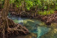 In the midst of the shady and beautiful nature.Tha Pom Klong Song Nam beautiful and famous tourist destination in Krabi, Thailand. The clear green stream flows royalty free stock images