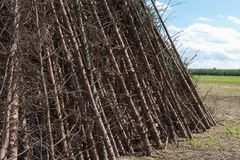 for a midsummer festival bonfire on a very sunny day in august i Stock Photo