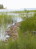 Midsummer landscape. Rocky beach, fresh green reeds and horizon Royalty Free Stock Image
