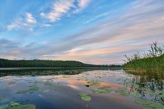 Midsummer Reflection at the Lake stock image