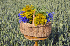 Midsummer time various medical herbs wicker basket Royalty Free Stock Photos