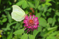 Midsummer. Wide variety of butterflies can also be found in the early spring and throughout the summer. The first butterflies appear when it is not rasstayal Royalty Free Stock Photos