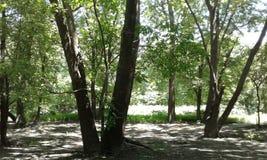 Midwest διασπασμένα δέντρα στοκ φωτογραφία με δικαίωμα ελεύθερης χρήσης