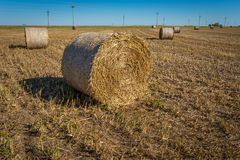 Midwest καλλιέργεια στοκ φωτογραφία με δικαίωμα ελεύθερης χρήσης