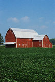 Midwest farm. This is a Midwest farm. It has a red barn and corn growing in the field royalty free stock photography