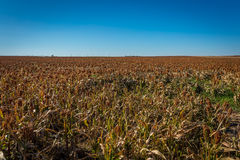 Midwest Farming. Amazing scenes of the midwest in the USA royalty free stock photos