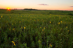 Midwest Prairie. Sunset on a Midwest prairie with wildflowers royalty free stock image
