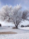Midwest snöig vinter Arkivfoto