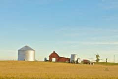 Midwest Soybean Farm. A soybean farm in the morning in America with large blue sky and red barn and silos on the horizon Royalty Free Stock Photos