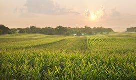 Midwestern cornfield below setting sun