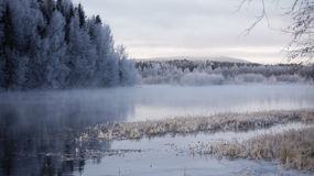 River and forest in winter Stock Photo