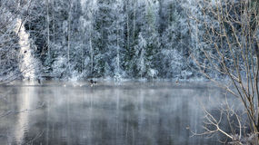 River and forest in winter Royalty Free Stock Images