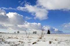 Midwinter snowy landscape with trees and sky clouds Stock Image